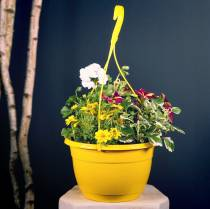 Blumenampel 25cm Grün