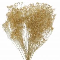 Trockenblumen Broom Bloom Gebleicht 140g