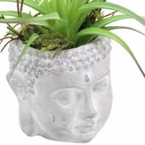 Buddhakopf zum Bepflanzen Beton Grau, Weiß gewaschen Ø8 H8cm