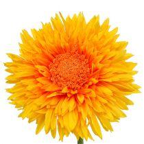 Chrysantheme Teddy 63cm Goldgelb