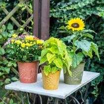 Deko-Eimer Früchte Gelb, Orange, Grün gewaschen Ø15cm H14cm 3er-Set