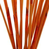 Dekostäbe Elephant Reed Orange 20St