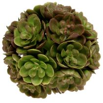 Echeveriaball 5cm Grün 4St