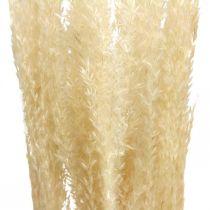 Getrocknetes Deko Gras Natur Ziergras Trockendeko 6Stiele