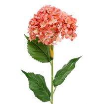 Hortensie Rosa 80cm 1St