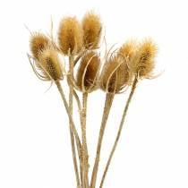 Trockenblumen Distel Natur 8St