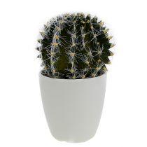 Kaktus im Topf Grün 14cm
