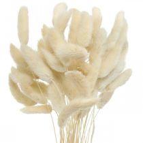 Lagurus getrocknet Hasenschwanzgras Gebleicht 40-50cm 50St