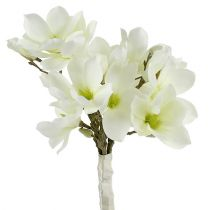 Magnolienbund Weiß 40cm 5St