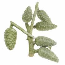 Maritimazapfen am Zweig Grün, gewachst 250g