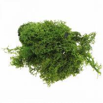 Deko Moos zum Basteln Dunkelgrün Natur-Moos konserviert 40g