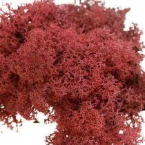 Deko Moos zum Basteln Rot Naturmoos gefärbt im Beutel 40g