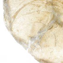 Stranddeko, Capiz-Muscheln 5–10cm, Naturartikel, Perlmutt, Maritim 1kg