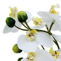 Orchideen im Topf 30cm Weiß