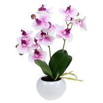 schweiz dekoartikel floristik bastelbedarf pflanzenschutz kaufen in schweiz. Black Bedroom Furniture Sets. Home Design Ideas