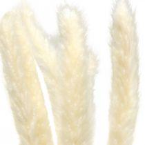 Getrocknetes Pampasgras Creme Für Trockenstrauß 65-75cm 6St