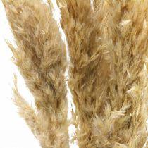 Trockendeko Pampasgras getrocknet gebleicht 70-75cm 6Stiele