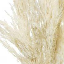 Pampasgras getrocknet Gebleicht Trockendeko 65-75cm 6St im Bund