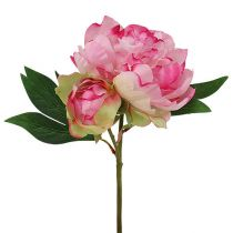 Pfingstrosen mit Knospe Rosa L30cm 2St