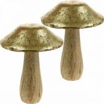 Pilz Mangoholz Gold, Natur Deko Pilze groß Ø12cm H15cm 2St