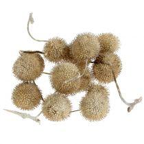 Platanen Früchte Weiß gewaschen 250g