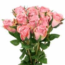 Rose Altrosa 42cm 12St