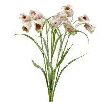 Schachblume Weiß-Rosa beschneit L45cm 6St