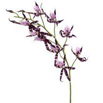Spinnenorchideen Brassia Lila 108cm 3St
