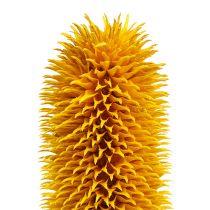 Spitzkarden Gelb 1kg