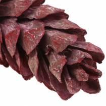 Strobus Zapfen Naturdeko Rot 15cm - 20cm 50St