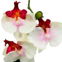Tischdekoration Orchidee im Topf Creme H29cm