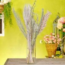 Trockenblumen Exoten Weiß-Natur Mix, Trockenfloristik-Mischung