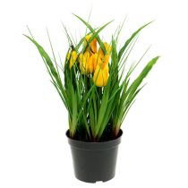 tulpen im topf gelb 30cm. Black Bedroom Furniture Sets. Home Design Ideas