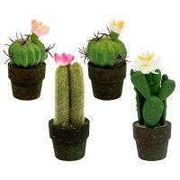 Mini Kaktus mit Blüten H9-12cm 4St