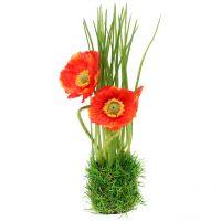 Mohn Rot im Gras 23cm