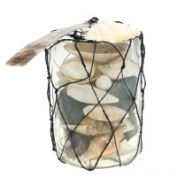 Muschelmix im Glas H11,5cm