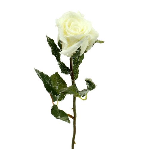 deko rose wei beschneit 6cm 6st kaufen in schweiz. Black Bedroom Furniture Sets. Home Design Ideas