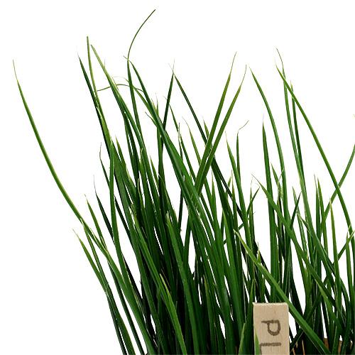 kr uter schnittlauch im topf 16cm gr n kaufen in schweiz. Black Bedroom Furniture Sets. Home Design Ideas