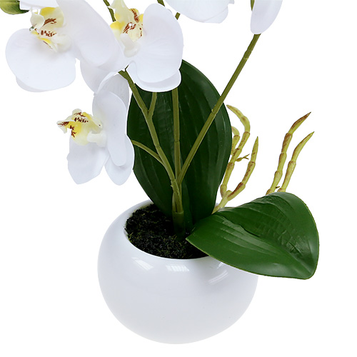 orchideen im topf 30cm wei kaufen in schweiz. Black Bedroom Furniture Sets. Home Design Ideas
