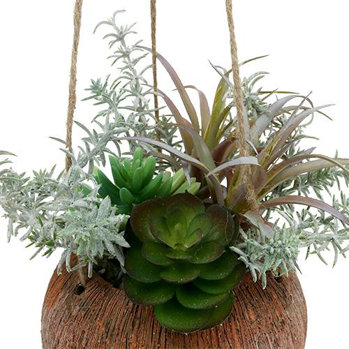Sukkulenten Grün im Topf zum Hängen 24cm kaufen in Schweiz ~ 07053851_Sukkulenten Bestellen Schweiz