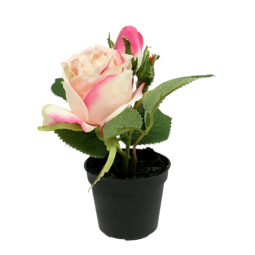 tischdeko rose im topf creme 14cm kaufen in schweiz. Black Bedroom Furniture Sets. Home Design Ideas