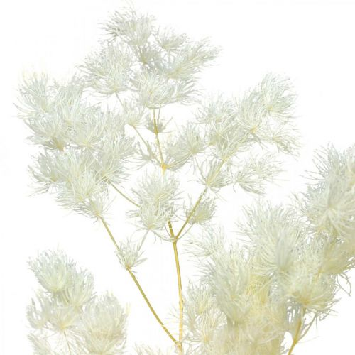 Asparagus Trockendeko Weiß Getrocknetes Ziergras 100g