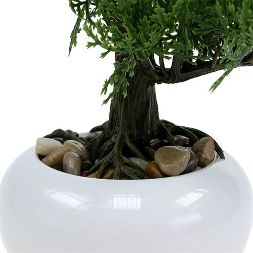 bonsai baum im topf 20cm kaufen in schweiz. Black Bedroom Furniture Sets. Home Design Ideas