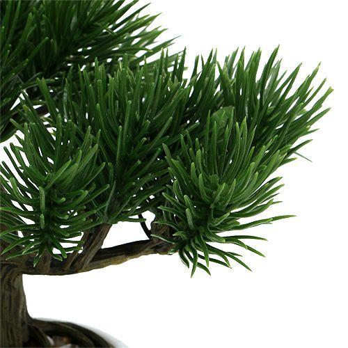bonsaibaum im topf 19cm 1st kaufen in schweiz. Black Bedroom Furniture Sets. Home Design Ideas