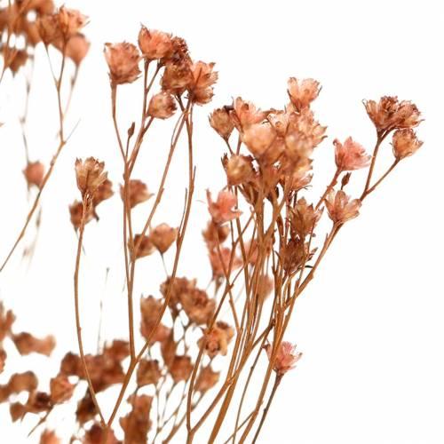 Trockenblumen Broom Bloom Braun 170g