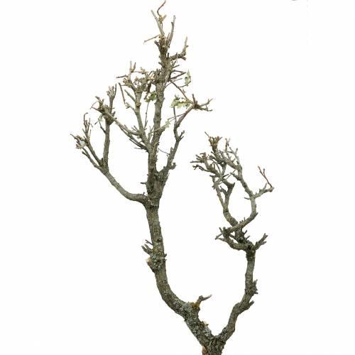 Dekoast Eiche Bonsai Natur