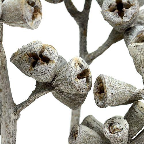 Eukalyptuszweig Weißgewaschen 25St