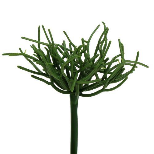 Euphorbienpick Grün 19cm 4St