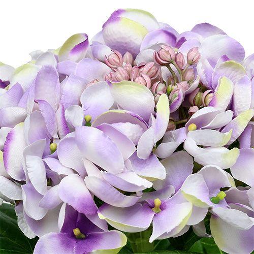 hortensie lila wei 60cm kaufen in schweiz. Black Bedroom Furniture Sets. Home Design Ideas