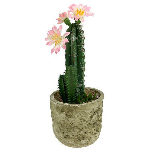 kaktus im topf mit bl te rosa h 21cm kaufen in schweiz. Black Bedroom Furniture Sets. Home Design Ideas
